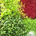 Grow your own microgreens Web 2