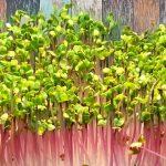 Grow your own microgreens Web 3